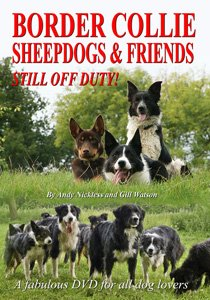 Border Collie Sheepdogs and Friends - Still Off Duty