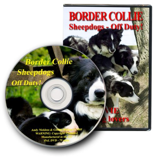Cover picture and disk - Border Collie Sheepdogs - Off Duty! (DVD)