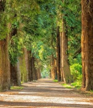 walk through a forest