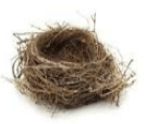 EMPTY NEST: WHAT TO DO BEFORE YOU EXPERIENCE IT