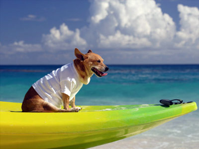 vacation-with-your-pet-1