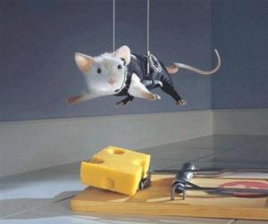 mouse cheese trap