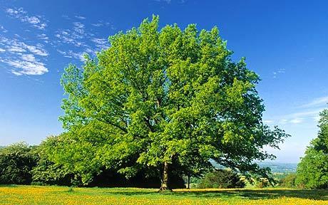 succession tree