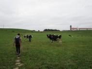 Nos amis les vaches - Jake et Gonzo
