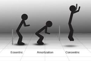 ストレッチショートニングサイクル 筋力