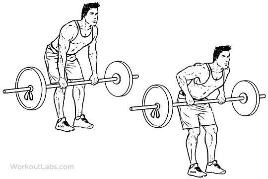 https://i2.wp.com/workoutlabs.com/wp-content/uploads/watermarked/Bent_Over_Barbell_Row.png