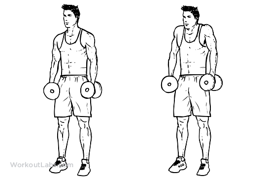 Image result for dumbbell shrugs