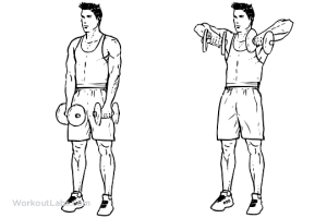 Upright Dumbbell Row | Illustrated Exercise guide  WorkoutLabs