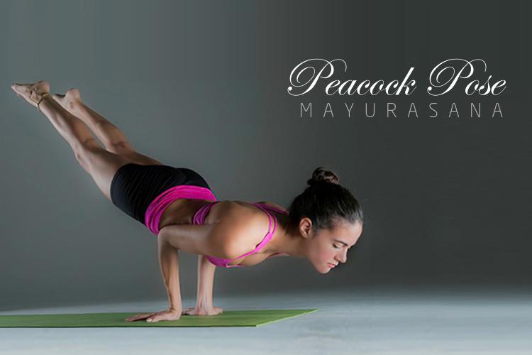 Peacock pose (Mayurasana)