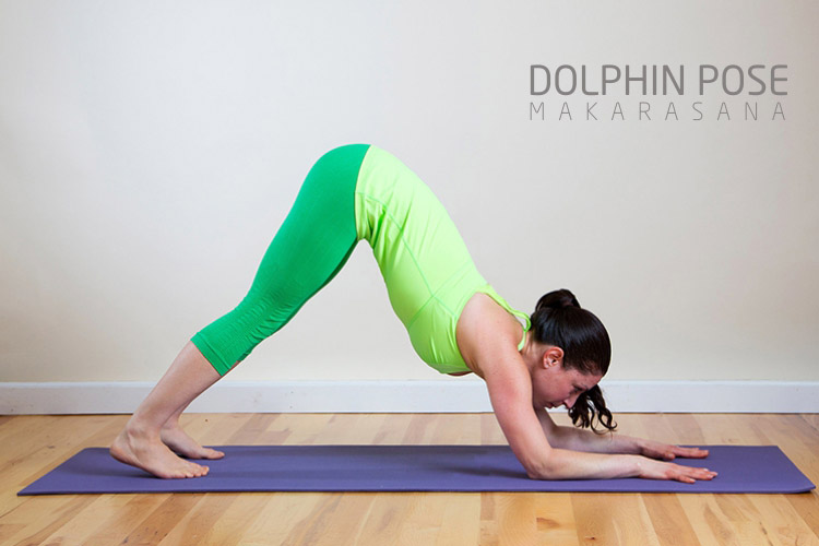 dolphin pose