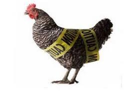 Bird flu ! Don't eat