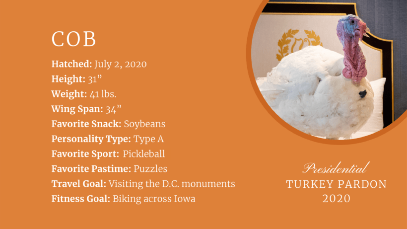 RIP Cob- The White House Turkey Who Was Not Pardoned.
