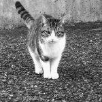 「猫の寿命は3年」のブログ引越しのお知らせ