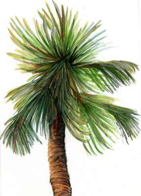 Palm by Susi Hall