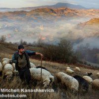 cioban roman cu oile in munte