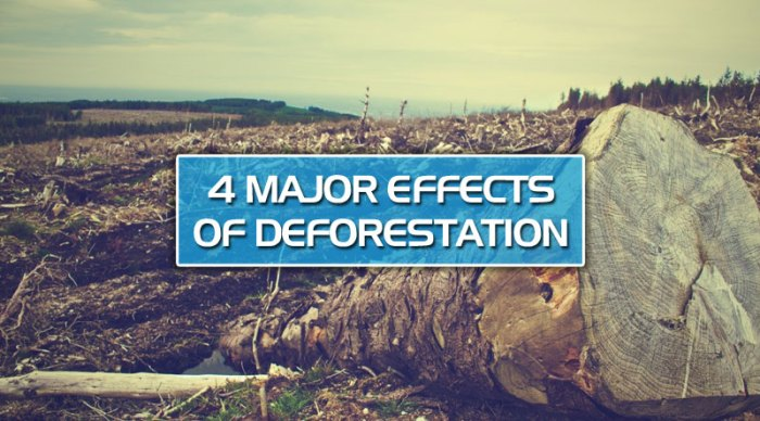 featured7 - 4 major effects of deforestation