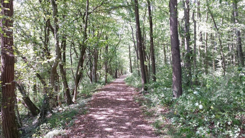Photo of forest track