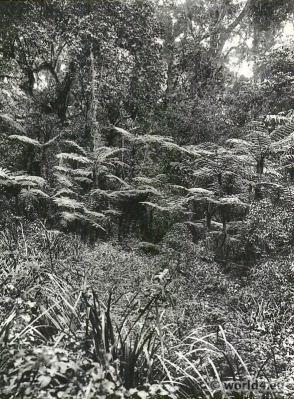African botanic jungle. Forest on Mt. Kilimanjaro.