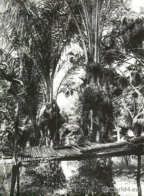 African Oil-palms (Elaeis), Belgian Congo.