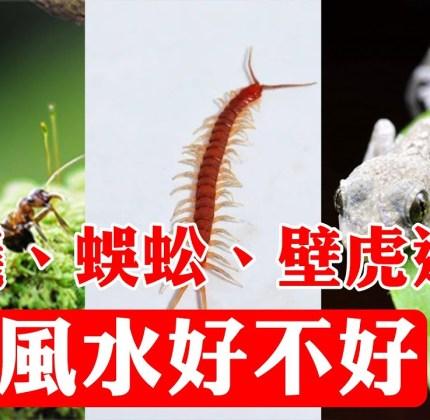 家中進了螞蟻、蜜蜂、飛蛾等小動物,預示著什麼?家運是吉是兇?