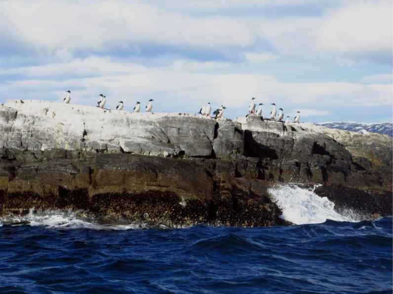 cormorans ushuaia canal beagle