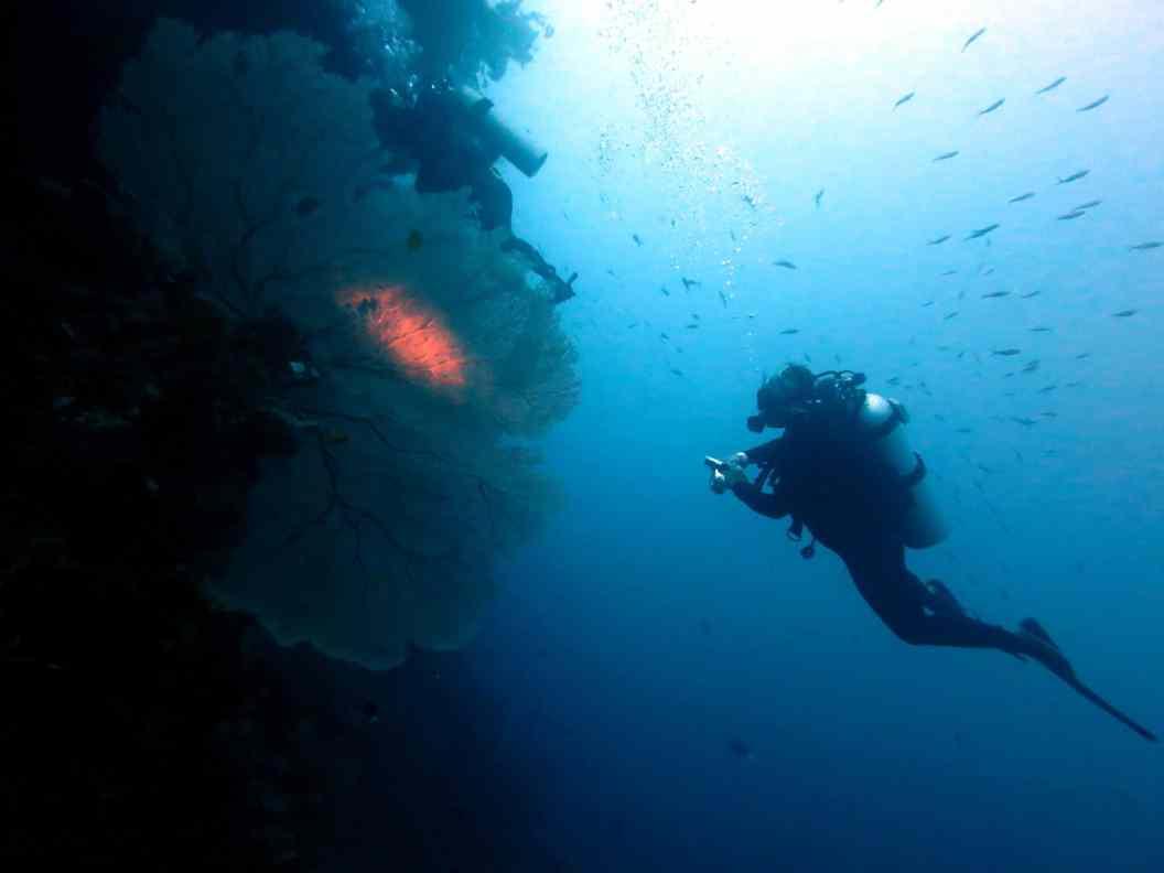 Huge sea fan Balicasag Bohol Philippines