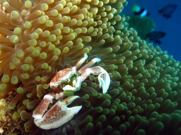 Plongée Panglao Bohol Visayas Philippines