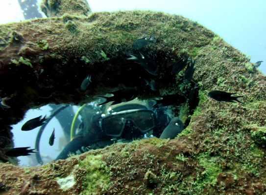 Scuba diver moray eel Sattakut wreck Koh Tao Thailand
