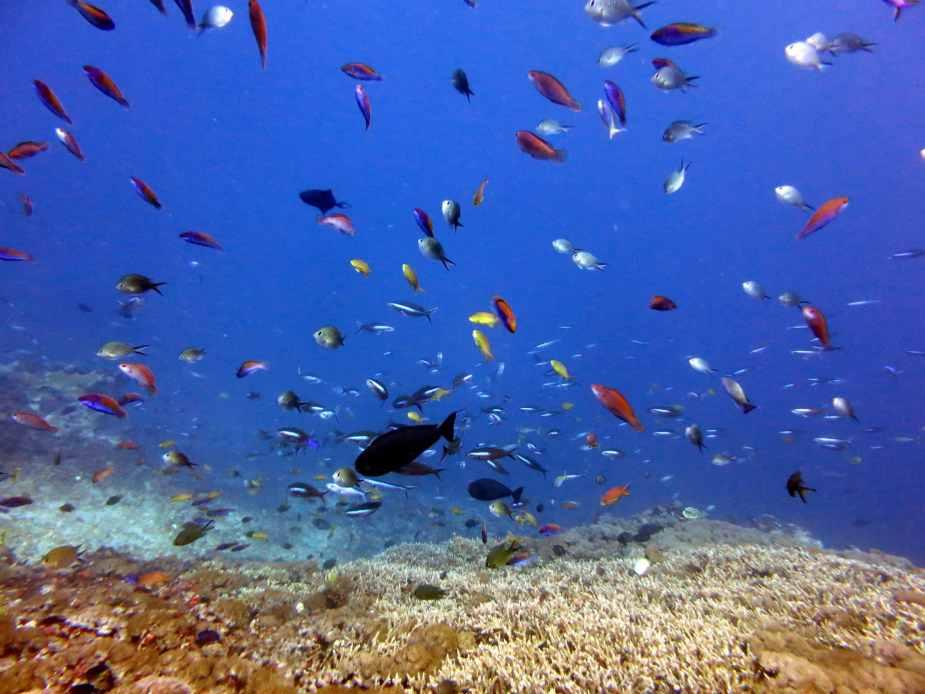 Crystal Bay - Bali diving