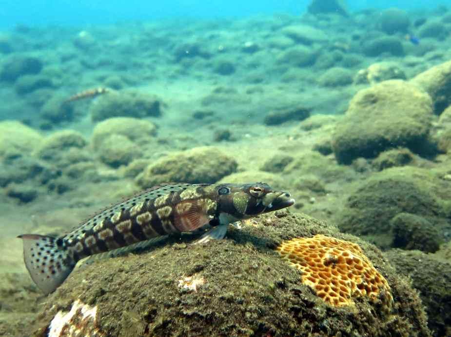 muck diving - best dive sites Bali