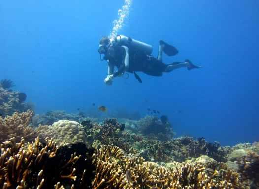 diver scuba diving Menjangan Island Bali Indonesia
