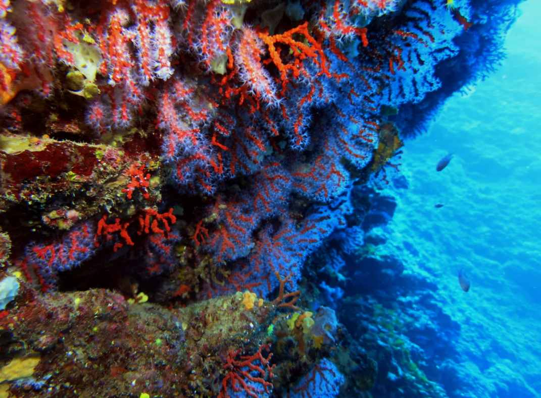 Red coral cavern Scuba diving Portofino Italy
