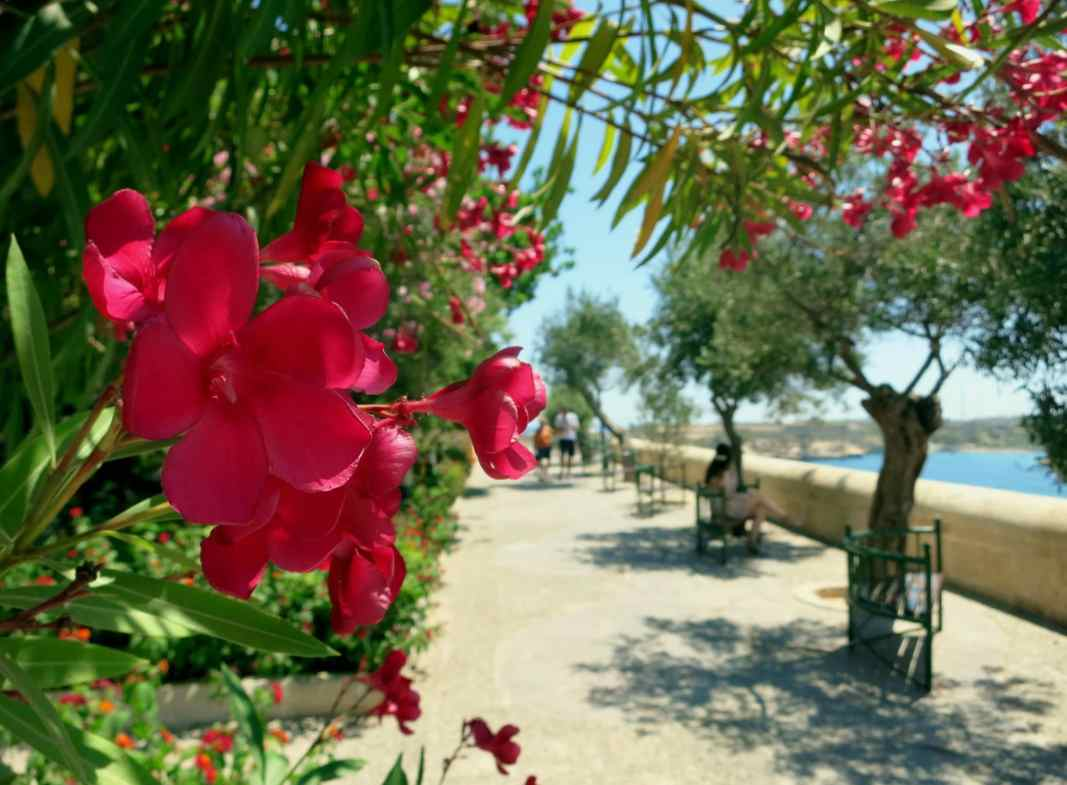 Weekend in Valletta Lower Barraka gardens Malta
