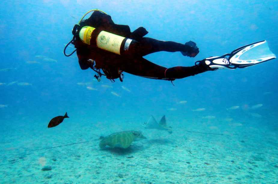 Scuba diving with Eagle rays Tenerife Canary Islands