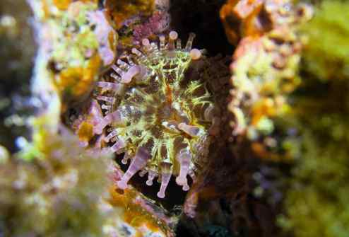 Sea anemone scuba diving Tenerife Canary Islands