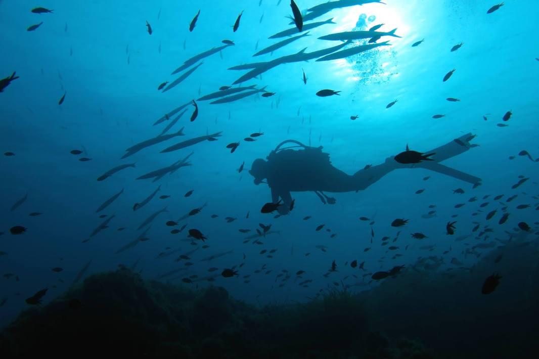 school of barracudas scuba diving porquerolles France