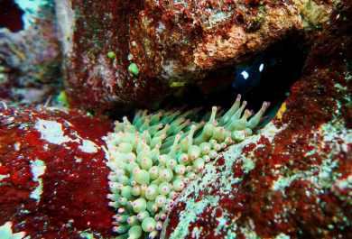 Scuba diving Izu Ocean Park Japan