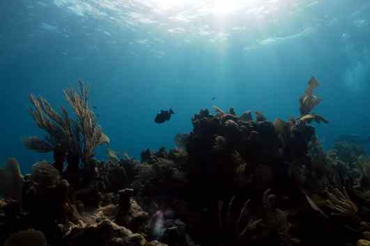 scuba diving Utila Honduras