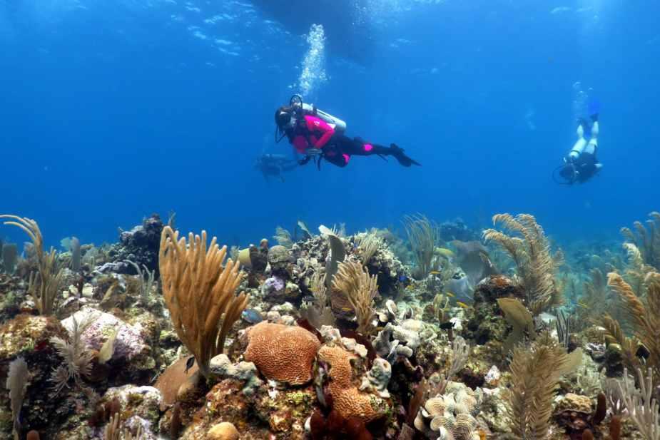 Scuba divers Coral reefs Utila Honduras