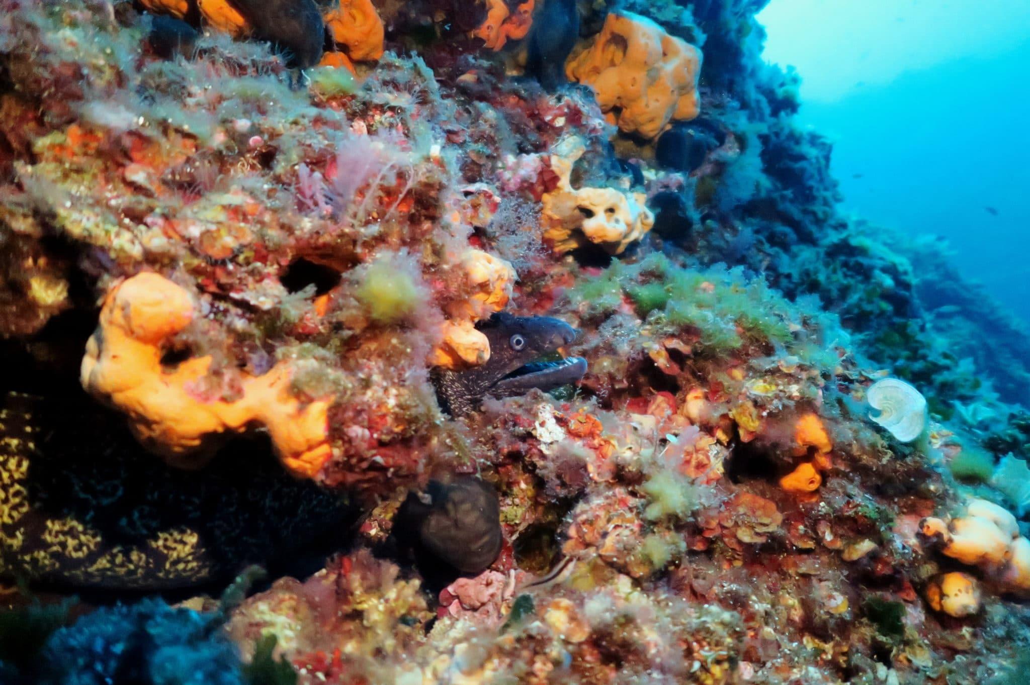 Scuba diving at Agios Georgios Reef Alonissos Greece