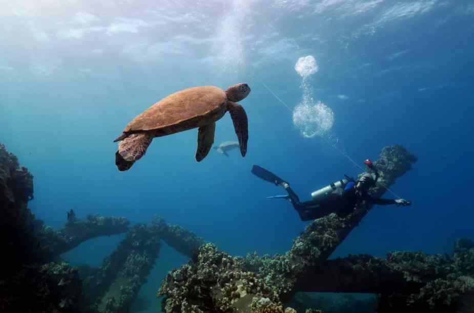 Turtle Mala Wharf shore diving Lahaina Maui Hawaii - Fun things to do in Hawaii
