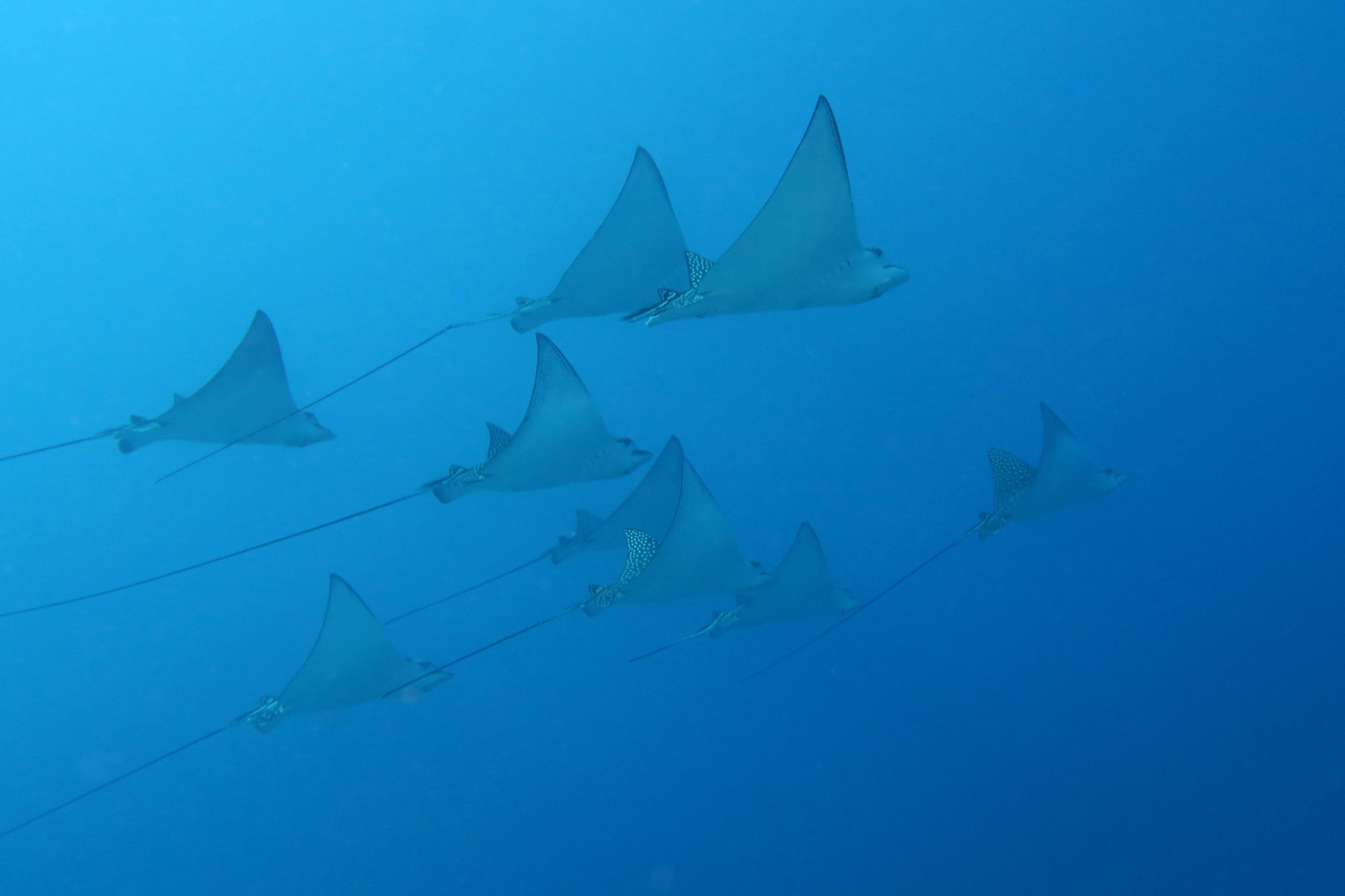 scuba diving Noumea New Caledonia