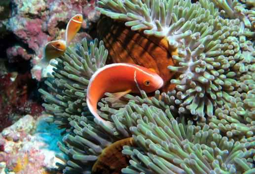 Scuba diving in Koumac New Caledonia