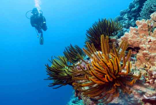 Scuba diving in Koumac New Caledonia