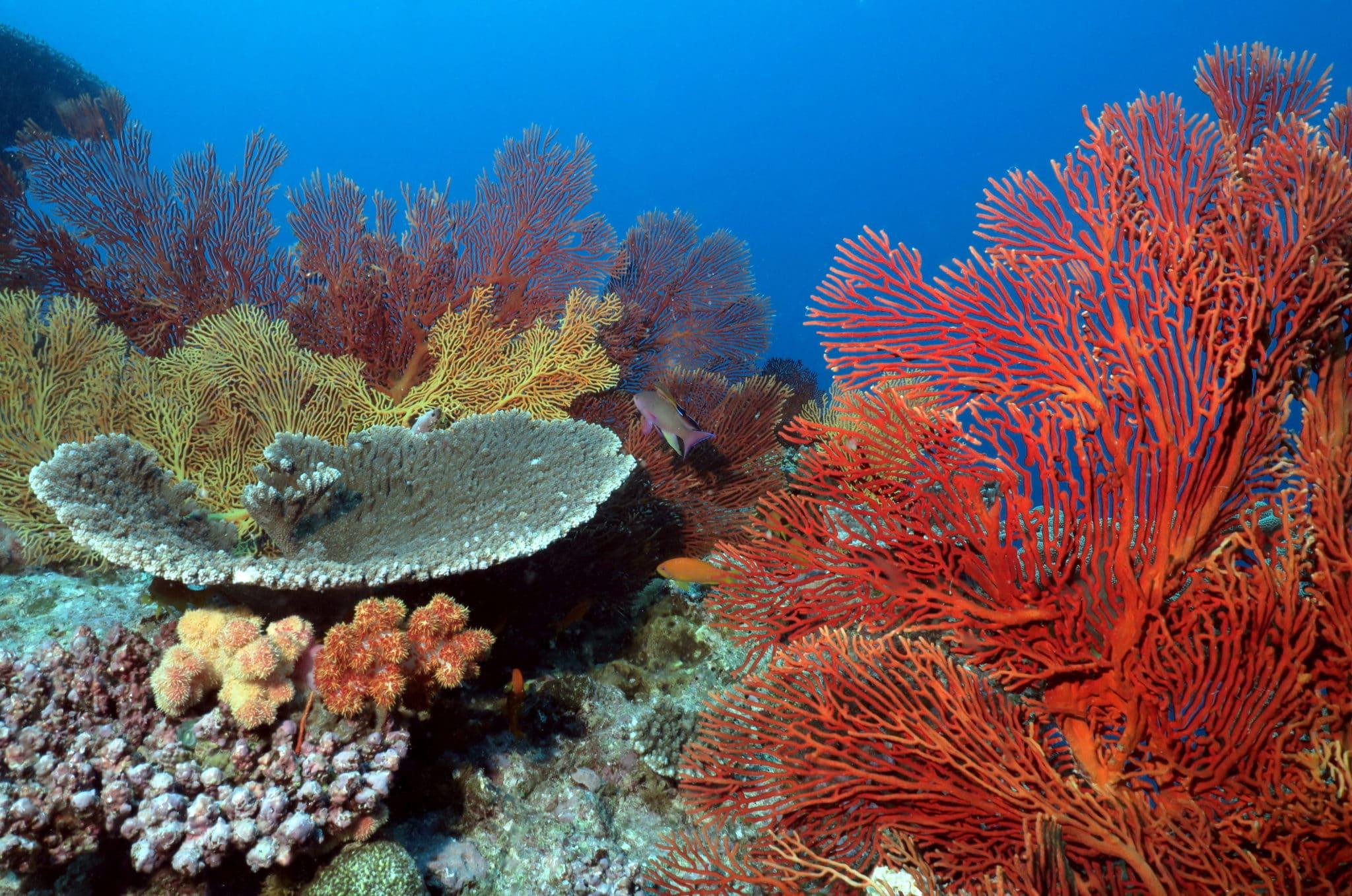 scuba diving Isle of Pines New Caledonia