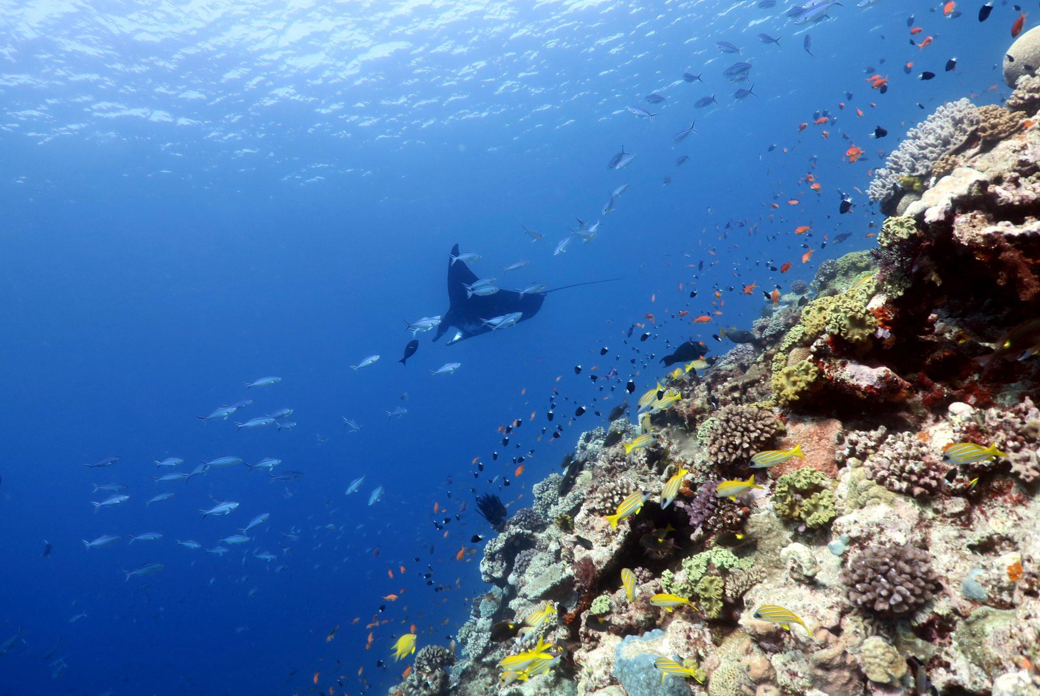 scuba diving Ouvea New Caledonia