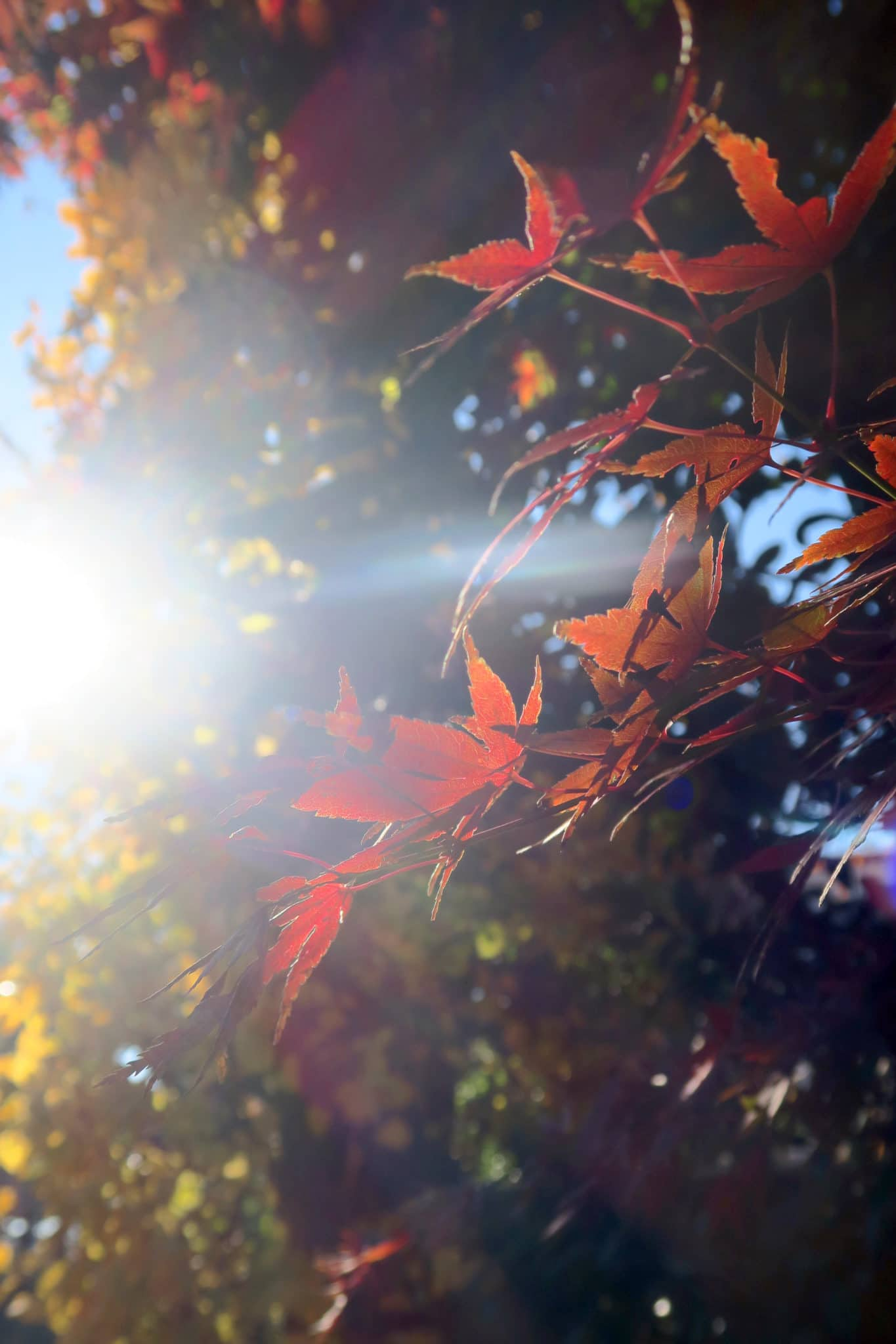 Couleurs d'automne à Tokyo