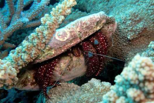Scuba diving Tutuba Reef Santo Vanuatu