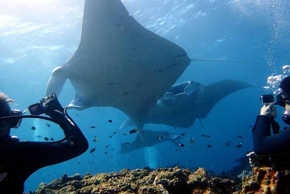 Manta ray Scuba diving Ishigaki Okinawa Japan
