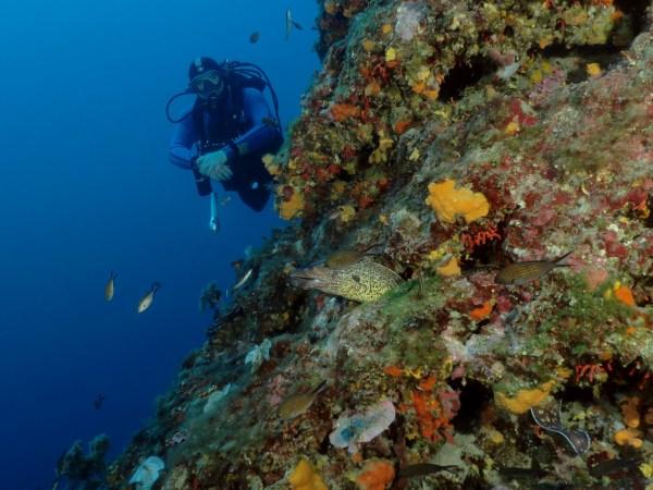 Diving Nice